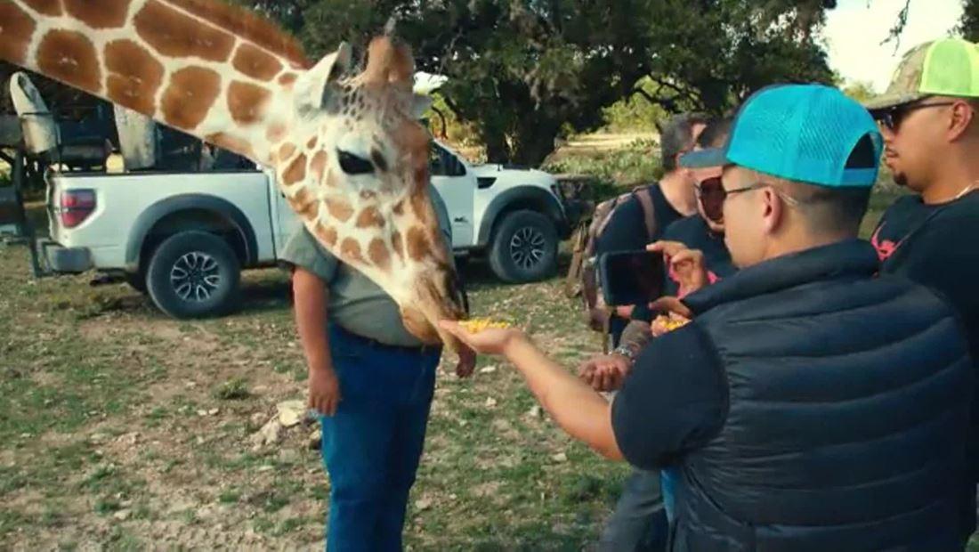 Larry y sus amigas las jirafas