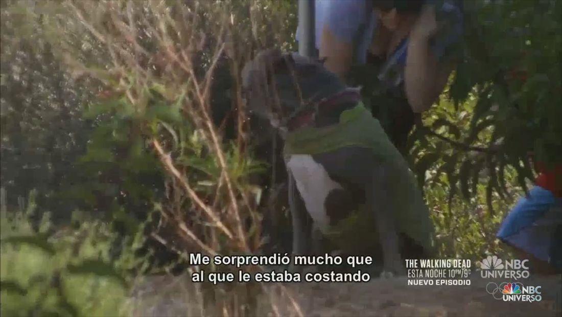 Los niños Rivera van de caminata y pierden el perro (VIDEO)